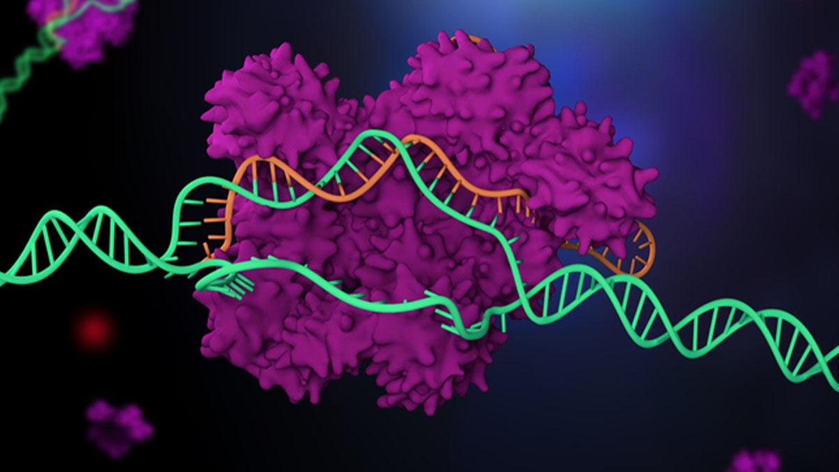 In Vitro 3D Cellular Model Shows Promise in Understanding Rare Pediatric Neurodegenerative Disease
